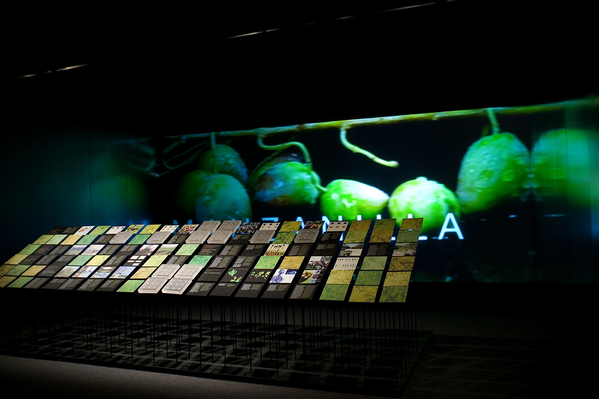 Room dedicated to the olive varieties and botanical characterization. It was accompanied by this attractive module and an audiovisual screening. Jaén. Lands of Olive Groves. The olive tree ... present and future.