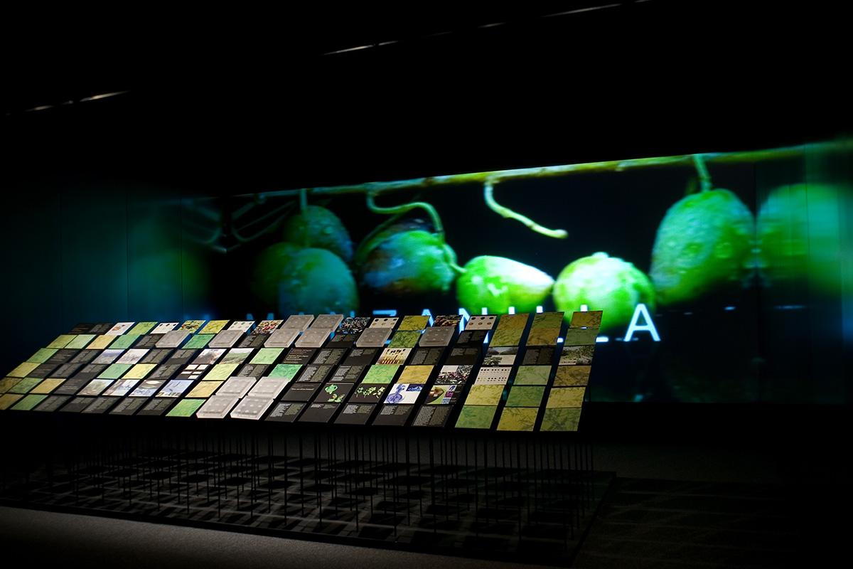 Sala dedicada a las variedades de olivo y a la caracterización botánica. Se acompañaba este vistoso montaje con un audiovisual.