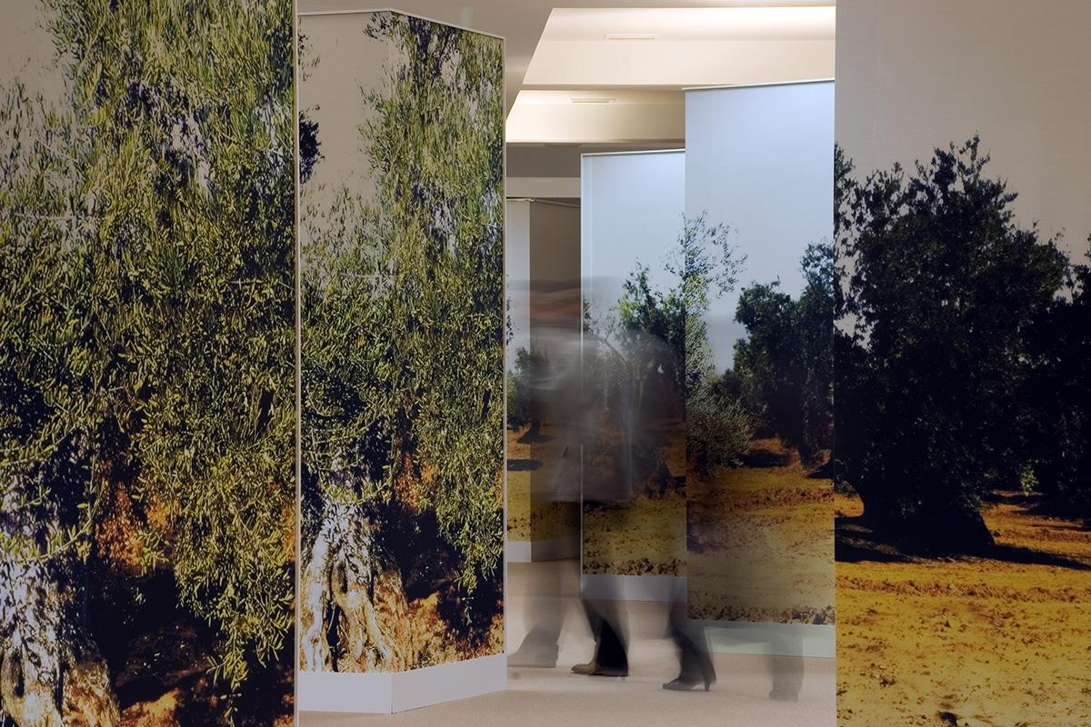 Espacio expositivo en la sede en Jaén. Exposición Tierras del Olivo. El olivo… presente y futuro.
