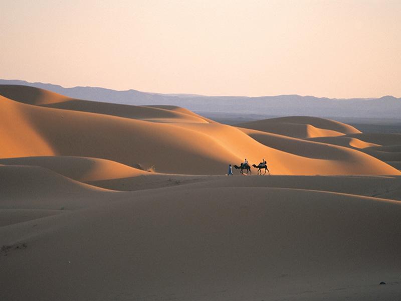 ©Henry Kneuer. Beduino con dos camellos en el desierto de arena del Erg Chebbi, cerca de Merzouga.