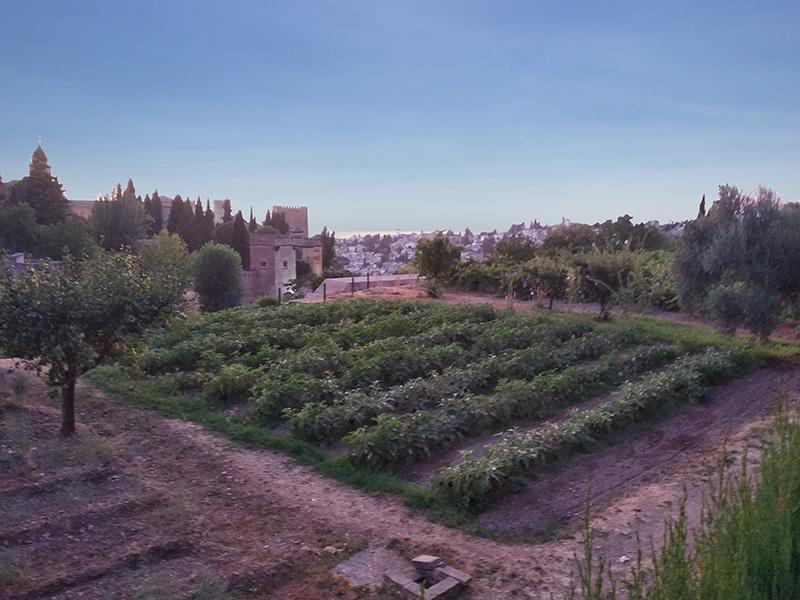 Vista desde los huertos del Generalife, con la Alhambra al fondo.